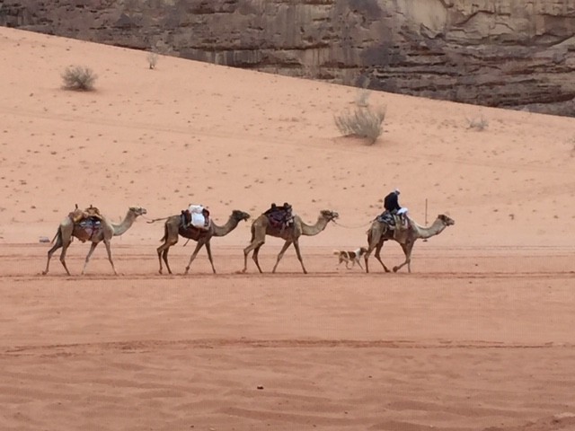 Blau - South - Wadi Rum Desert Tour h
